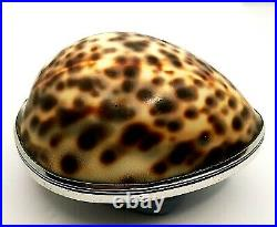 Scottish Provincial Silver. Silver mounted Cowrie Shell Snuff Box. Ca. 1800